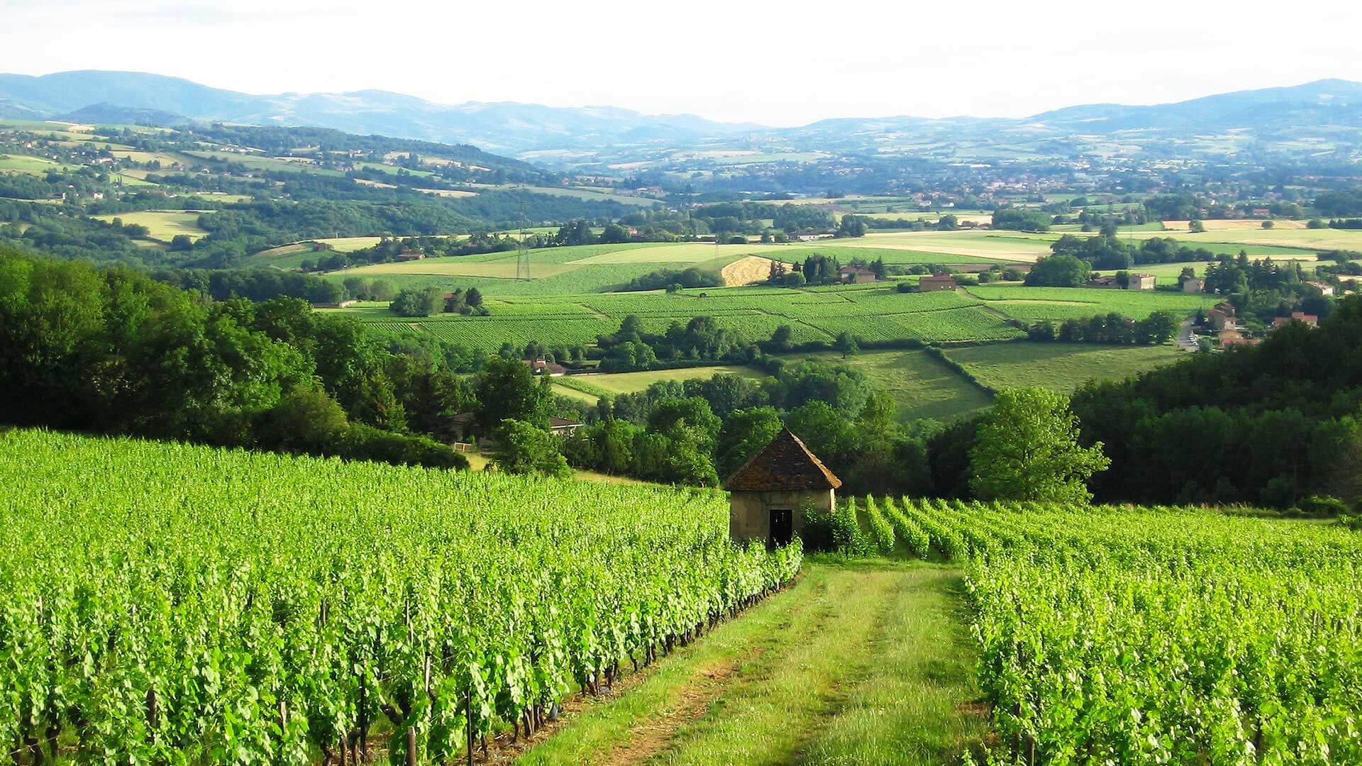 Tourism and gastronomy in Beaujolais Tourism & gastronomy