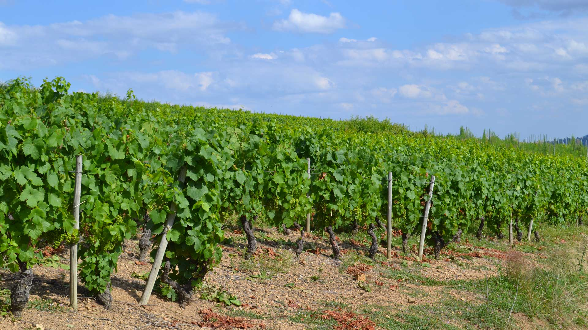 Our Domain Vines & terroirs